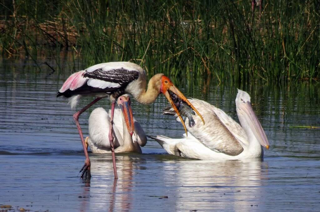 さまざまな国や地域で行われる生物多様性保全への取り組み