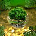 地球温暖化の対策に向けてどのような取り組みが行われているか