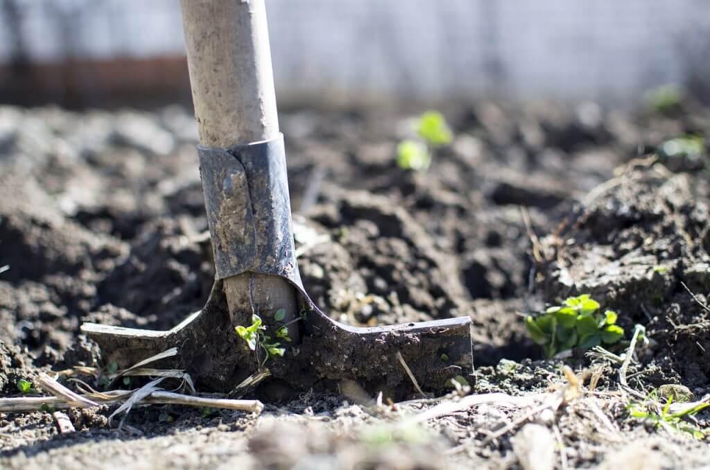有機栽培の現状と課題