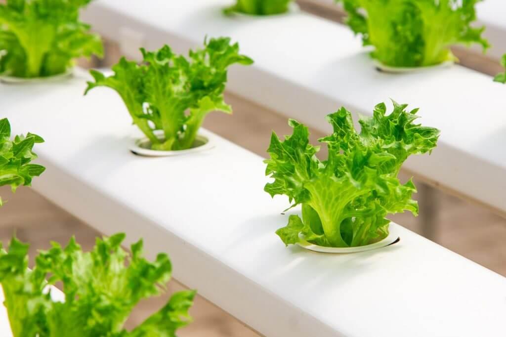 特別栽培農産物とは