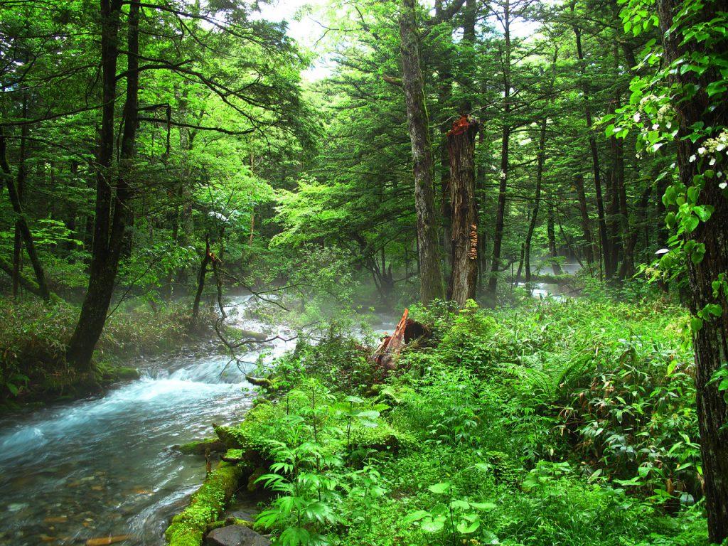 森林をなくさないために!森林保全のためのさまざまな方法