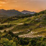 今後の日本を左右する?耕作放棄される棚田の現状と保全への取り組み