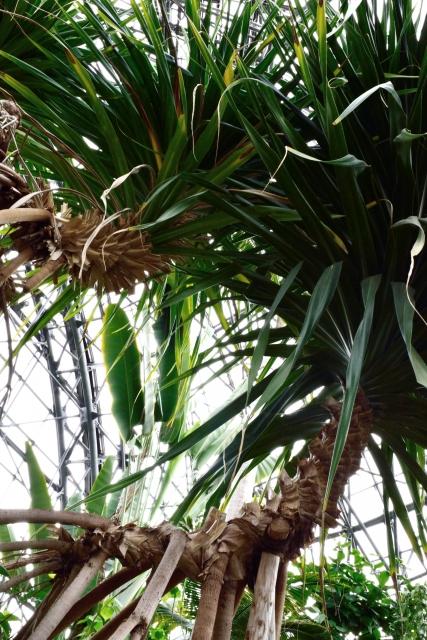 小笠原諸島の生態系
