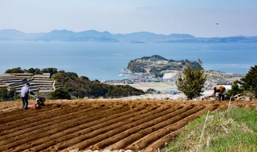 農業の現場に入り込んで仕事がしたい(長崎県島原市 地域おこし協力隊 光野竜司)