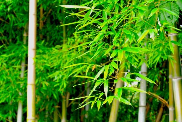 使用される竹