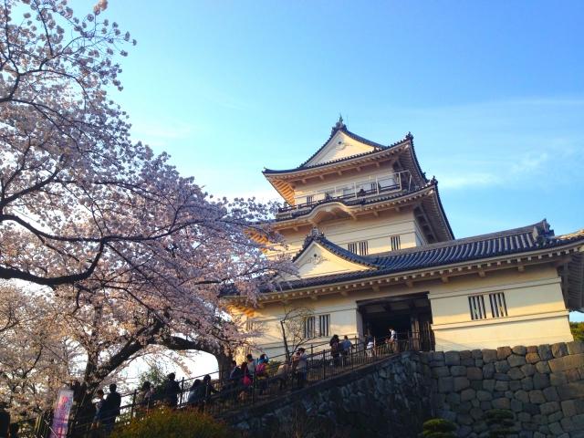 小田原かまぼこや笹かまぼこなど、地域で人気のかまぼこを食べてみよう