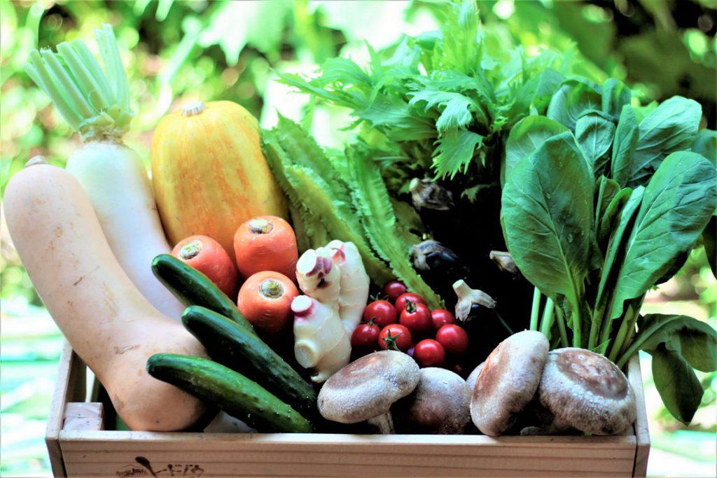 九州はたくさんの種類の野菜が作れるから面白い