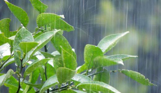 身近な環境問題の一つ「酸性雨」の原因と危険性