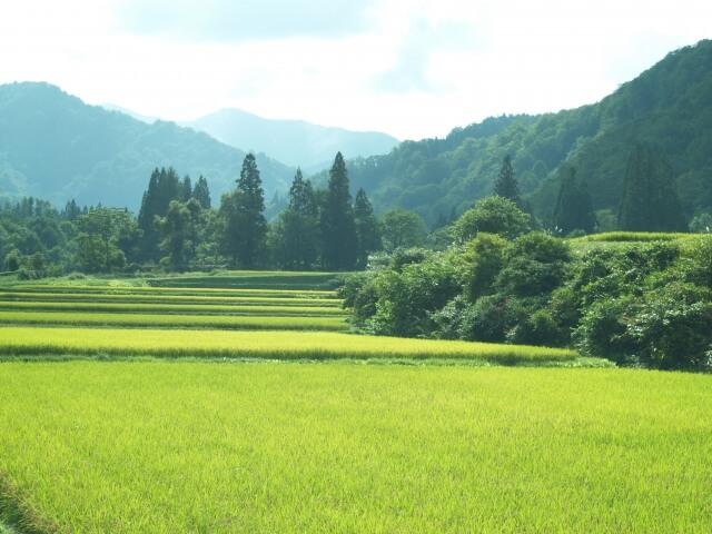 日本の食料自給率が低下している原因