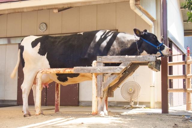 日本の酪農について