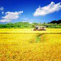 農業を法人化する?農業法人のメリットと設立までの流れ