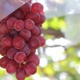 世界にも名をとどろかせる山梨のワイン「甲州ワイン」の魅力