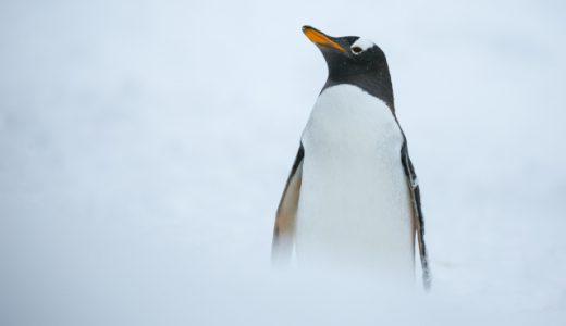 南極・北極の違いと生息している生物