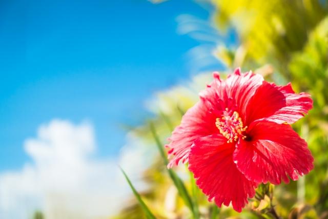 沖縄の焼き物名物「ヒラヤーチー」