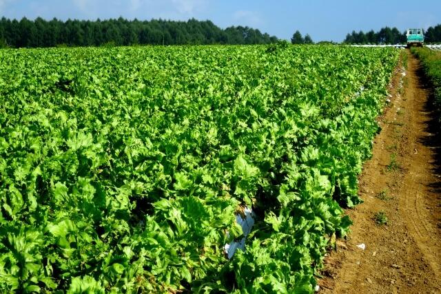 高原で栽培される野菜「高原野菜」