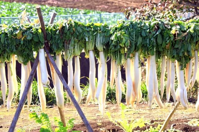 高原野菜を利用した地域活性