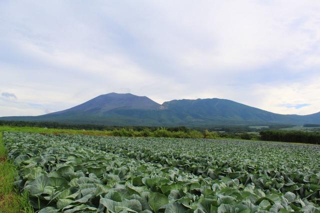 大地の恵みがたくさん詰まった「高原野菜」のおいしさのひみつ