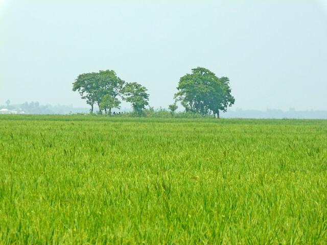 世界農業遺産(GIAHS=ジアス)の制度で衰退する農業を守る