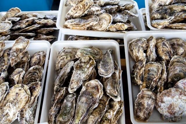 養殖漁業と栽培漁業