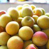 超一流品の梅干し「南高梅」のさまざまなおいしさのカタチ
