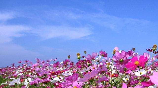 毎年5月に開催される「三川内焼窯元はまぜん祭り」