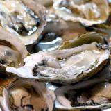 日本一の生産量を誇る広島県の牡蠣をお腹いっぱい食べる!