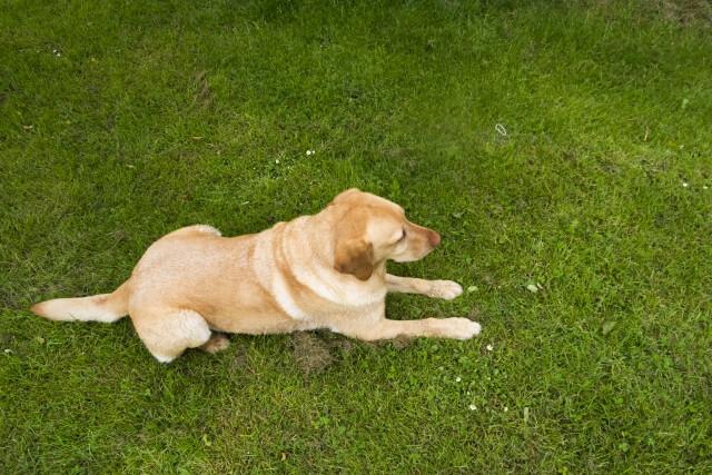 盲導犬が訓練で一人前になるまで