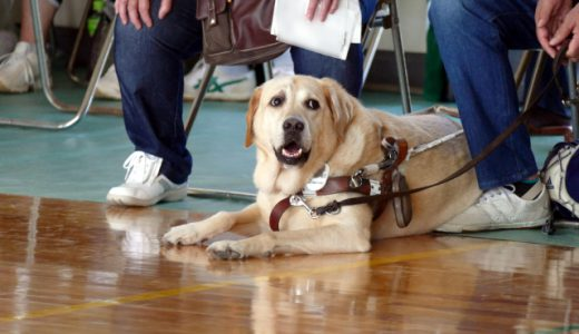 全国で活躍する盲導犬は大勢によって支えられていた