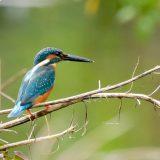 最近よく耳にする生物多様性とはどんな意味?