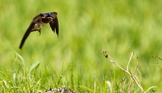 日本がこのままだと危ない?生物多様性に迫る4つの危機