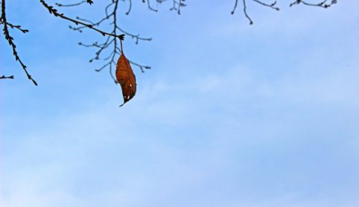 なぜ孤独死は起こりうるのか原因を考える