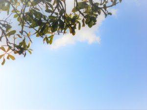 徳島で開発されたいちごの新品種「サマーアミーゴ」