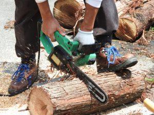 江戸時代から続く林業の歴史