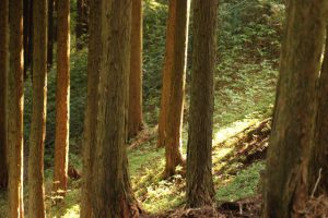 戦後の森林状況