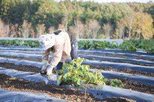農業技術発展による環境破壊