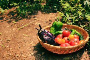 有機栽培・無農薬野菜との違い
