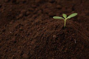 オーガニック・有機農産物の表示
