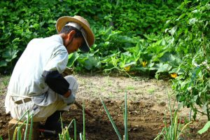 日本の農業人口、200万人割れ